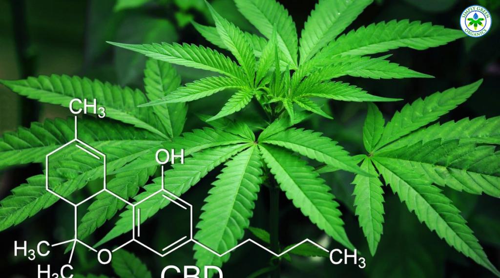 cannabidiol or CBD