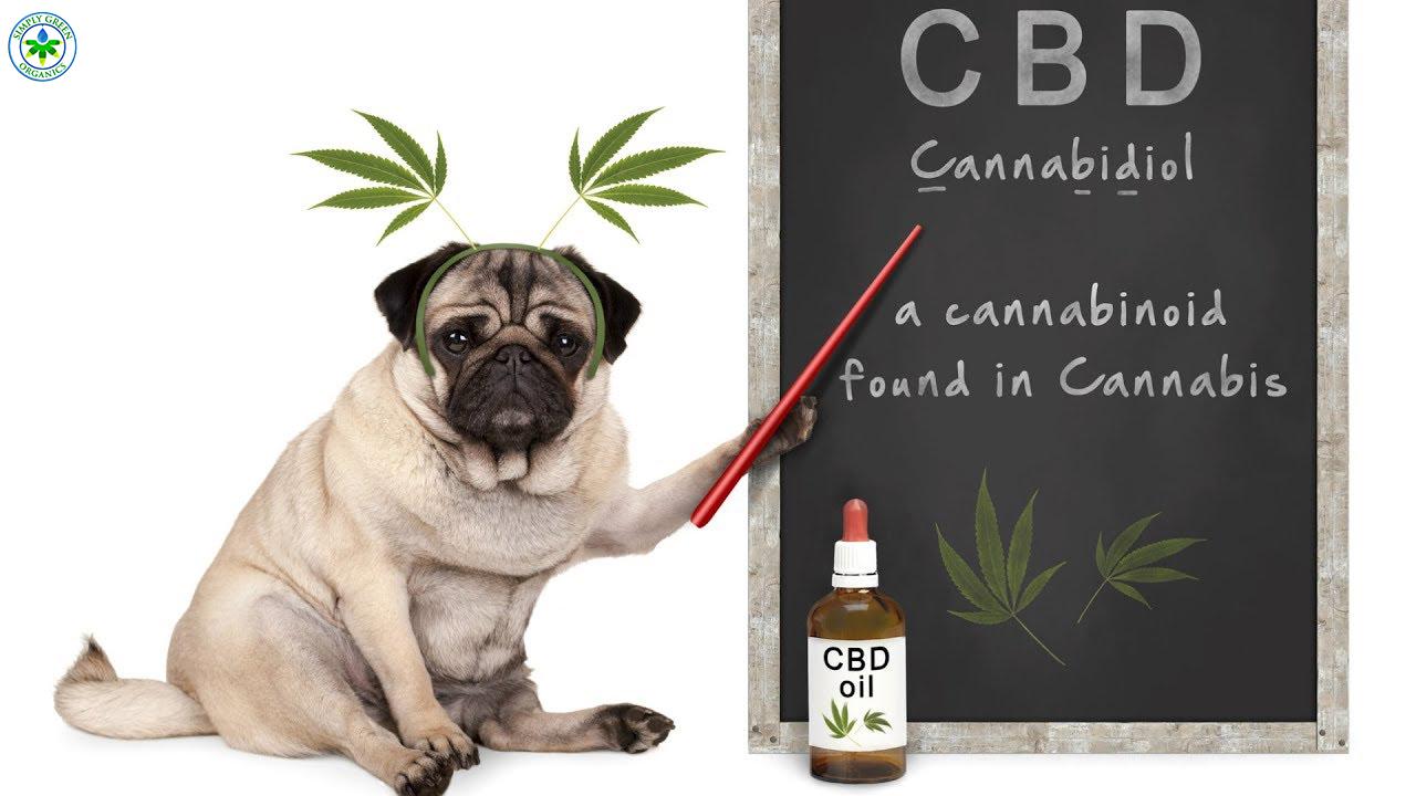 CBD For PET