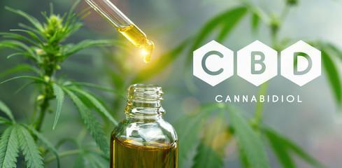 CBD OIL IN USA